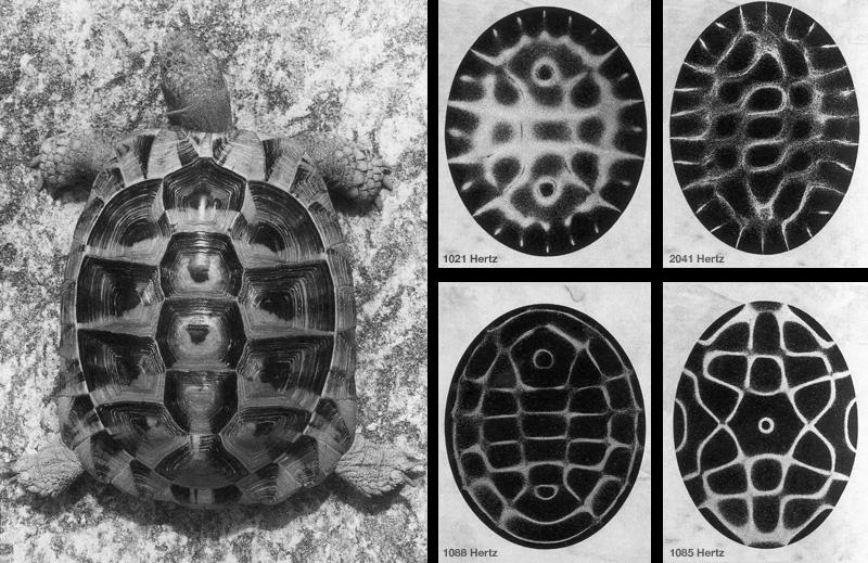 tortoise_800.png